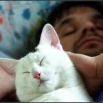 Кошки-целители