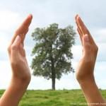 Энергообмен с деревьями