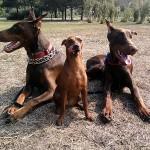 Энергетика собак