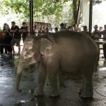 Привязанный слон