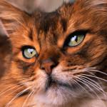 Удивительный мир кошек
