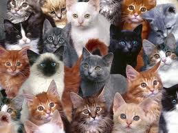 Удивительные кошки