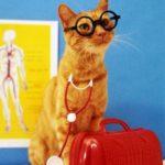 Лечение...кошками!